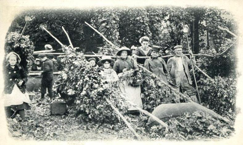 Hop Pickers